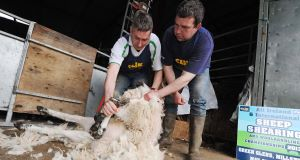 Conor Power sheep shearing with the guidance of Tim Creedon