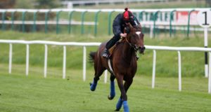 Telescope: Michael Stoute's colt will miss  the Derby because of a sore shin.
